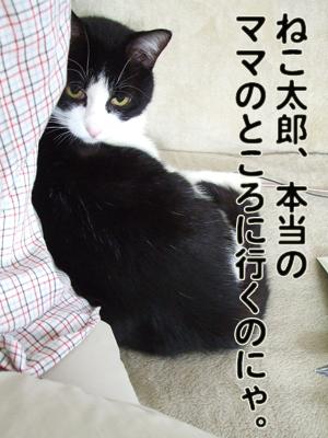 2010_03230045.jpg