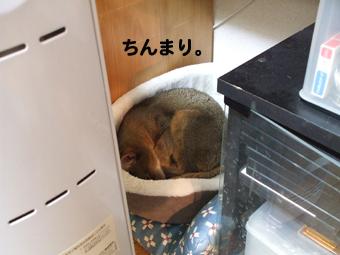 2010_03300007.jpg