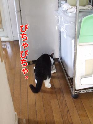 2010_04060056.jpg