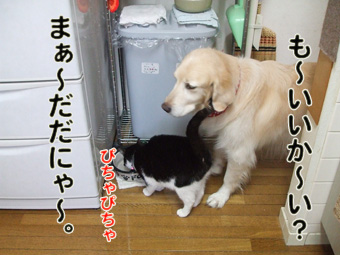 2010_04100003.jpg