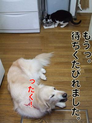 2010_04100008.jpg