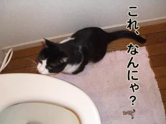 2010_04100040.jpg