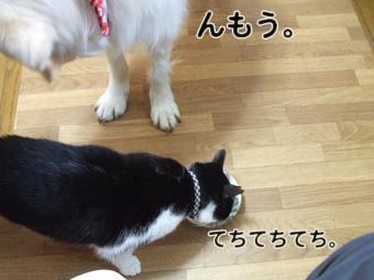2010_04100085.jpg