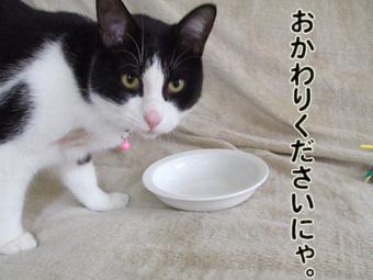2010_04110088.jpg