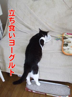 2010_04110089.jpg