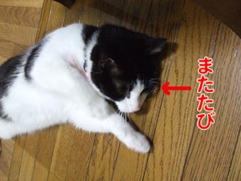 2010_04120020.jpg
