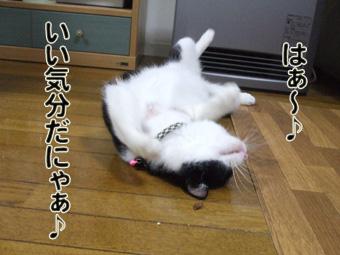 2010_04120027.jpg