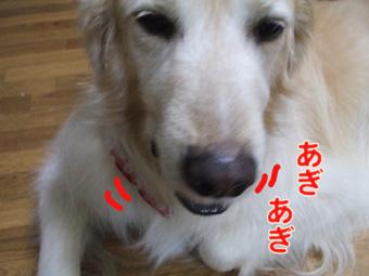 2010_04120031.jpg