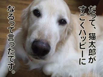 2010_04120034.jpg