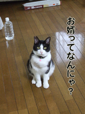 2010_04120126.jpg