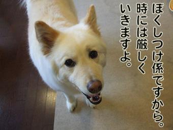 2010_04120145.jpg