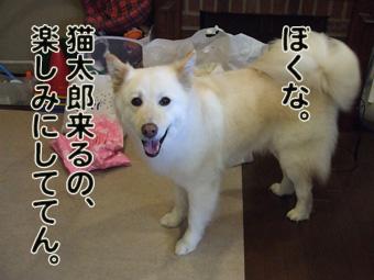 2010_04120156.jpg