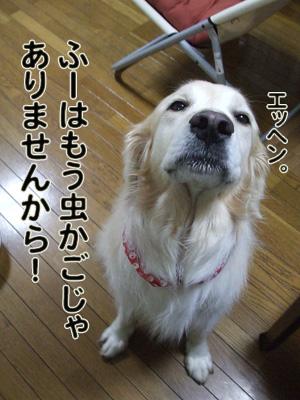 2010_04240027.jpg
