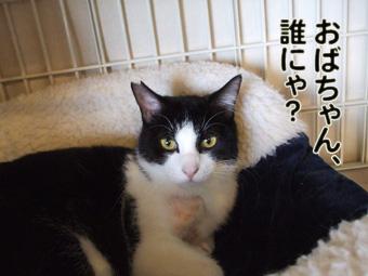 2010_04270009.jpg