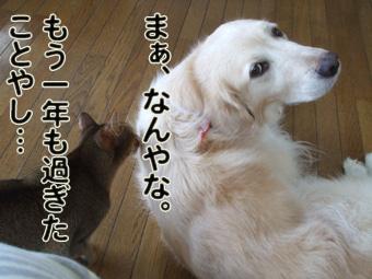2010_05010048.jpg