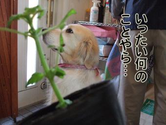 2010_05080026.jpg