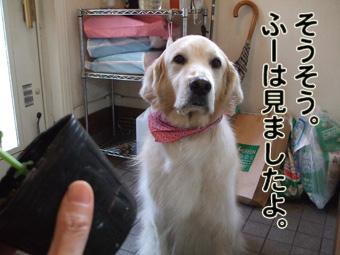 2010_05080029.jpg