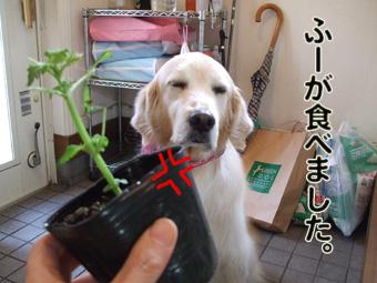 2010_05080031.jpg