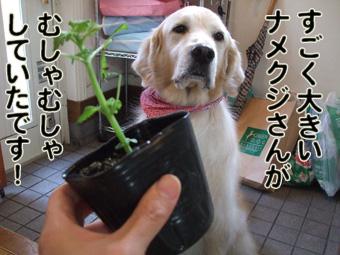 2010_05080033.jpg