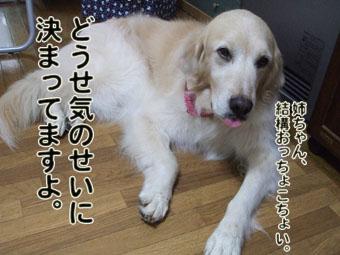 2010_05080037.jpg