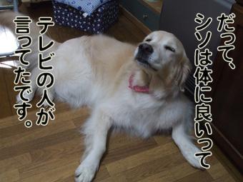 2010_05080043.jpg