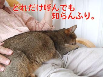 2010_05090006.jpg