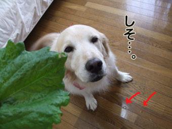 2010_05160023.jpg