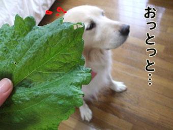 2010_05160024.jpg