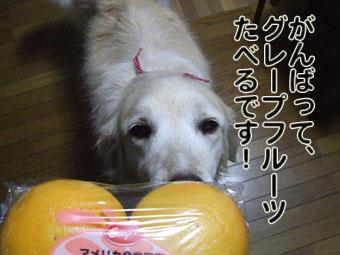 2010_05160049.jpg