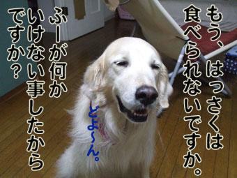 2010_05160051.jpg