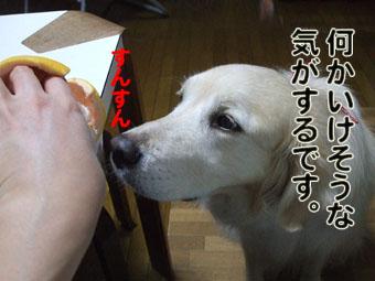 2010_05160056.jpg