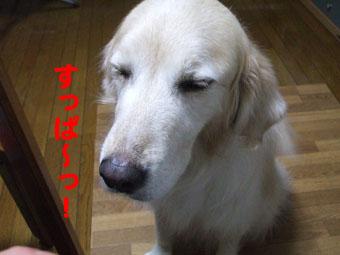 2010_05160061.jpg