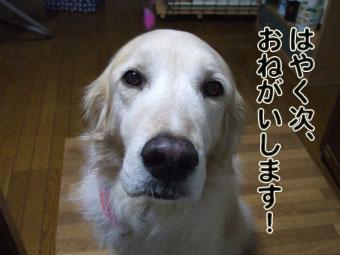 2010_05160062.jpg