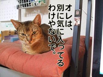 2010_05200010oreha.jpg