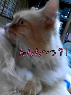 んんん~っ?!