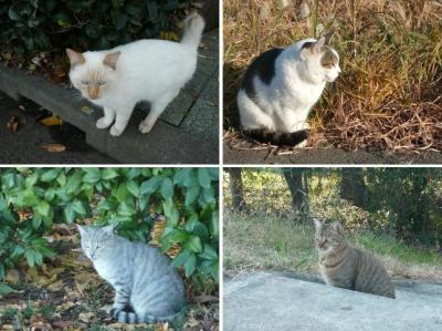 散歩道で出あった猫様たち