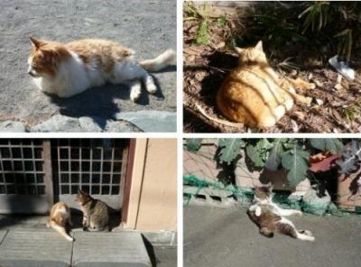 江ノ島のネコその1