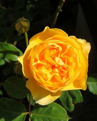 きれいな黄色
