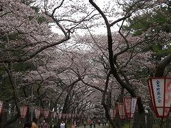 かなぎ桜まつり2010.05.04 019