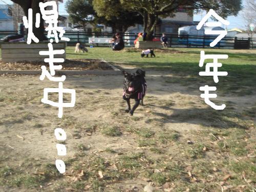 snap_omame89_201010231932.jpg
