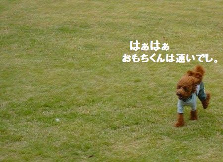 s-P1020879 - コピー