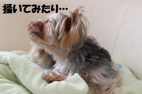 IMG_0101 - コピー