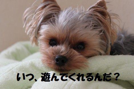 IMG_0105 - コピー