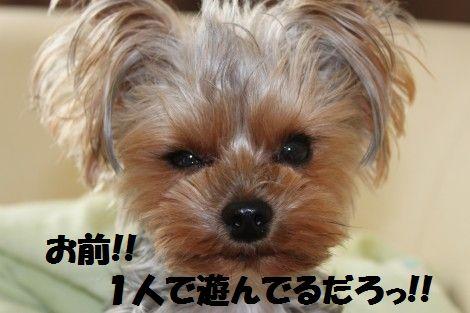IMG_0111 - コピー