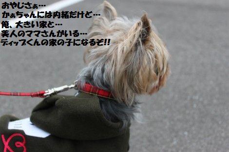 IMG_0127 - コピー