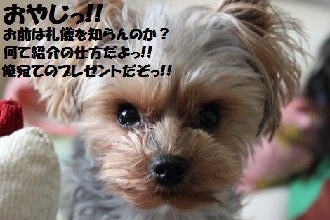 IMG_0262 - コピー (2)