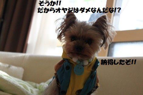 IMG_0412 - コピー