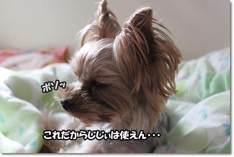 IMG_5076.jpg