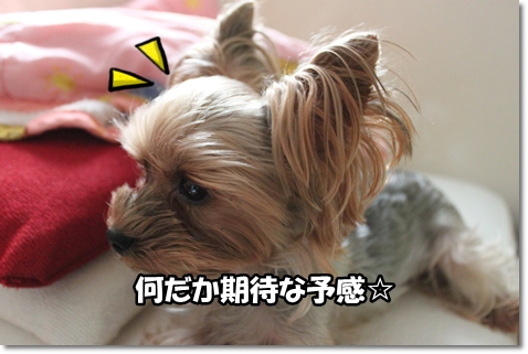 IMG_5130.jpg
