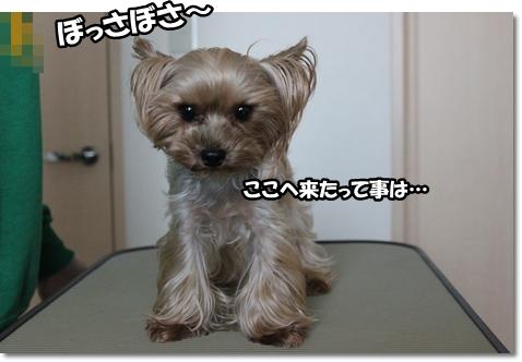 IMG_5134.jpg